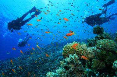 koh-rong-samloem-snorkeling-scuba-diving-activities